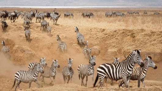 Safari 1 day: Tarangire National Park