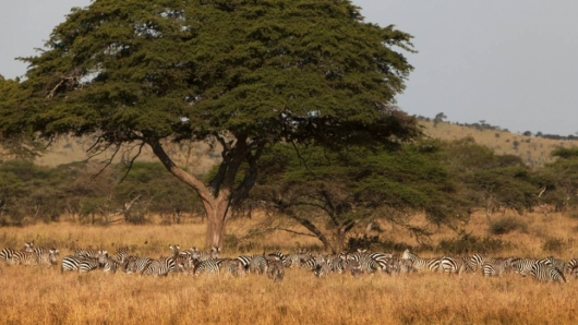 Safari 4 days: Lake Manyara, Serengeti, Ngorongoro