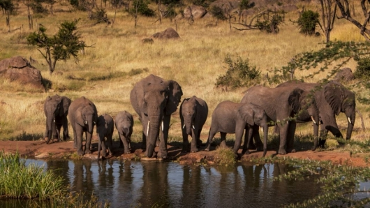 Safari 4 days: Tarangire, Serengeti and Ngorongoro